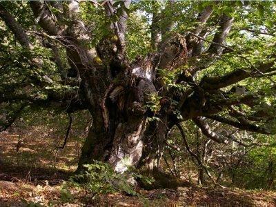 Старое дерево, под которым живут гномы