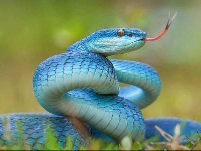 Змея по гороскопу