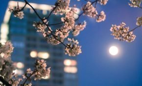 Лунный календарь важных дел для марта 2020 года