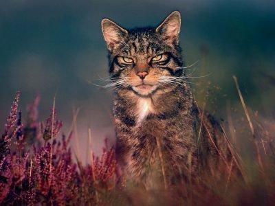 Кот в гороскопе