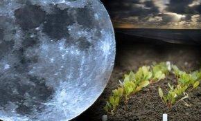 Лунный календарь для сада и огорода на март 2020 года