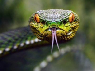 Змея во сне - толкование