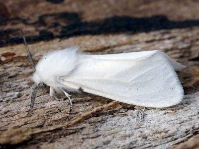 Белая бабочка во сне