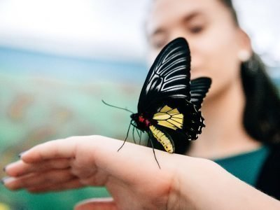 Бабочка во сне села на руку
