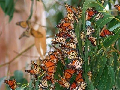 Много бабочек во сне - значение