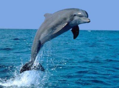 Дельфин в море во сне - что значит