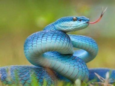 Сон про змею в исламском соннике