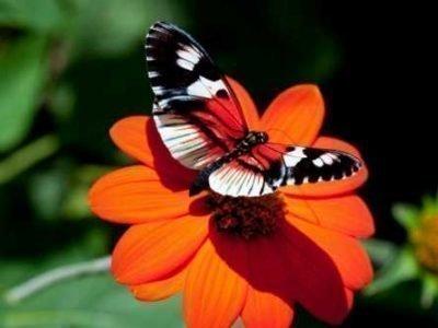 Яркая бабочка во сне - толкование