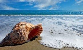 К чему видеть море или океан во сне: плавать в нем, голубое и спокойное или бушующее и с волнами