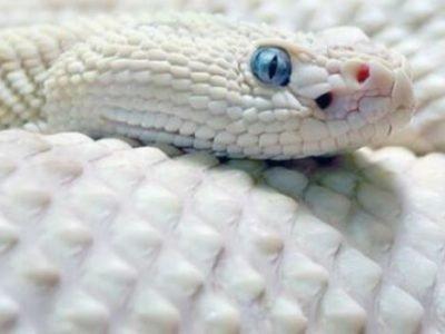 Белая змея во сне толкование