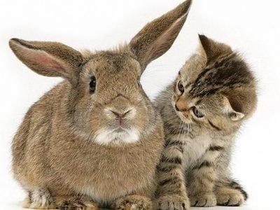 Кролик Кот по гороскопу