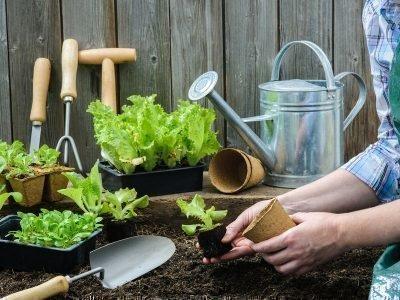 Календарь садово-огородных работ на июнь 2020