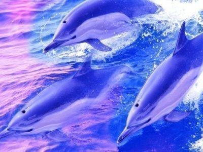 Дельфины во сне толкование