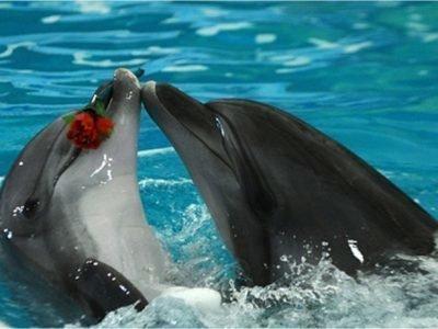 Сон про дельфинов что означает