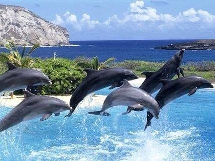 Много дельфинов во сне