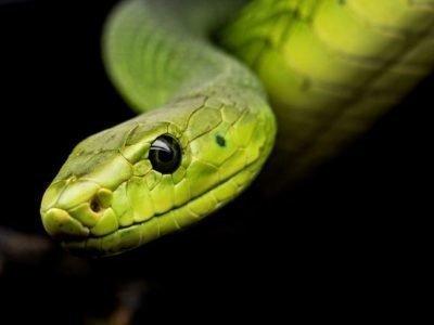 Знак Зодиака Змея
