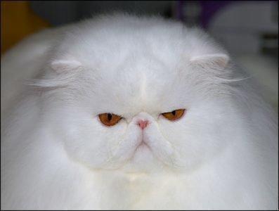 Приснился белый кот - толкование