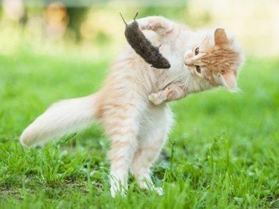 Кошка играет с мышкой во сне