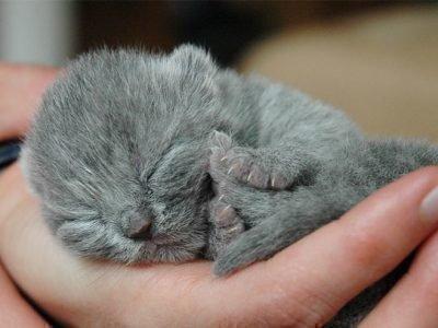 Приснился серый котик