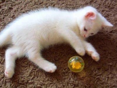 Котенок играет - толкование сна