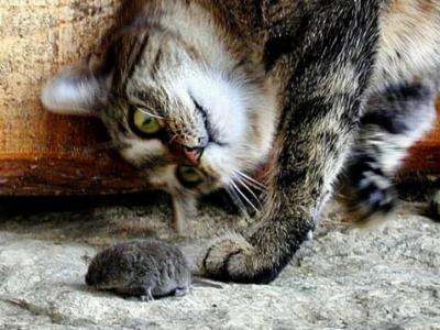 Кошка во сне ловит мышку