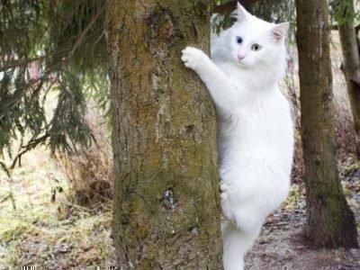 Найти белую кошку во сне - что значит