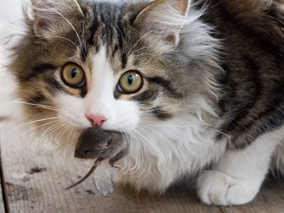 Кот поймал мышь во сне