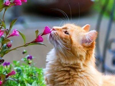 Сон про рыжего кота