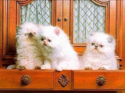 Много белых котят во сне
