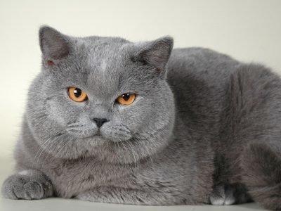 Серый кот во сне