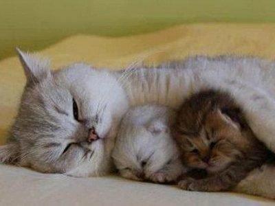 Приснилась спящая кошка с котятами - что значит