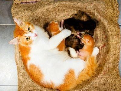 К чему приснилась кошка с котятами
