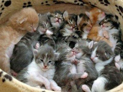 Много котят во сне - толкование