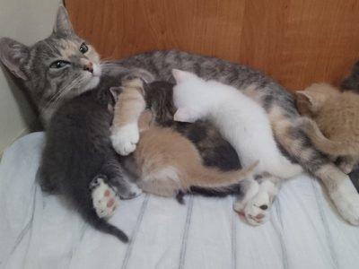 Кошка кормить котят - толкование сна
