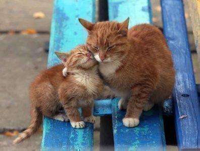Кошка с котенком во сне - хороший знак