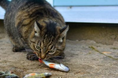 Кормление кота рыбой во сне