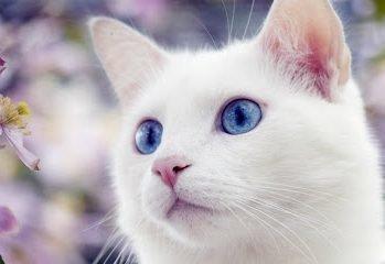 Толкование сна с белой кошкой