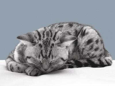 Убить кошку во сне - толкование