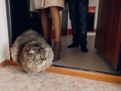 Прогонять кошку из дома - что значит