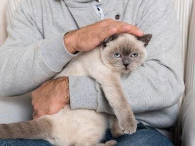 Во сне держать и гладить кошку