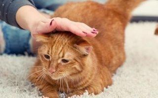 К чему гладить и ласкать кошку во сне