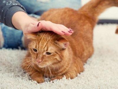 Толкование сна про глажку кошки