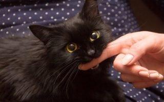 К чему нападает, кусает и царапает кошка во сне