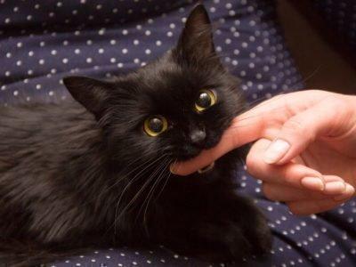 Кошка кусает во сне