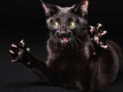 Во сне кошка нападает - что это значит