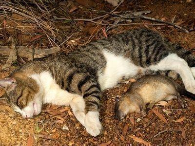 Толкование сна про убийство кошки