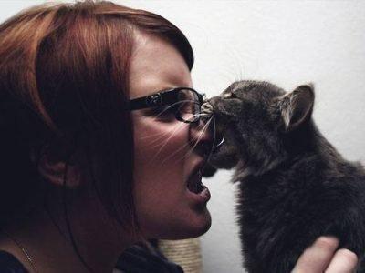 Сон про укус кошки - значение