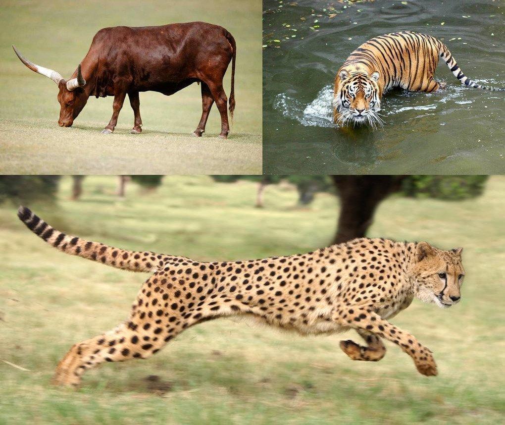 Какого животного будет 2022 год